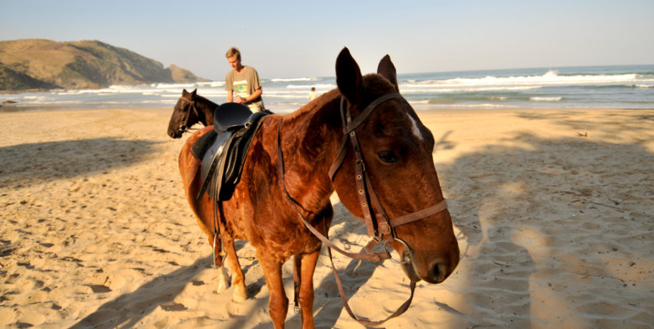 Horse on beach, Port St Johns
