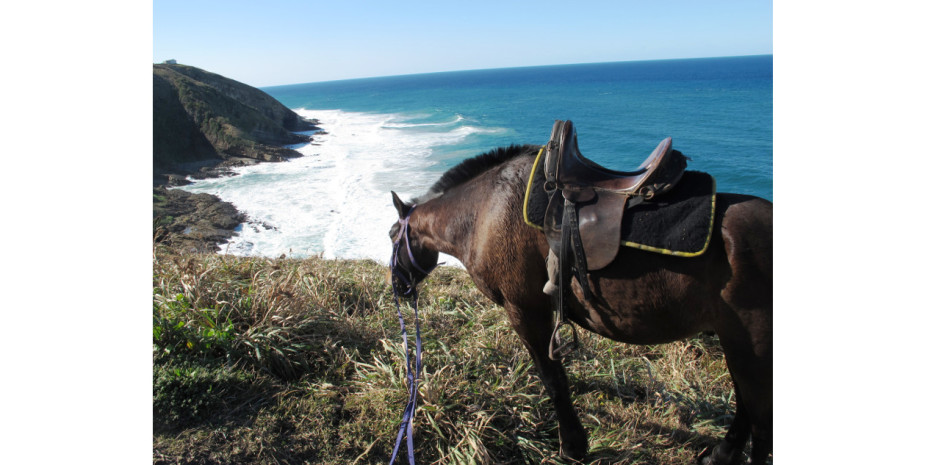 Horse with view, Port St Johns